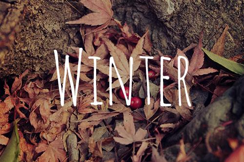 「モミジ」「枯れ葉」「植物」「紅葉」「落ち葉」「赤い実」などがテーマのフリー写真画像