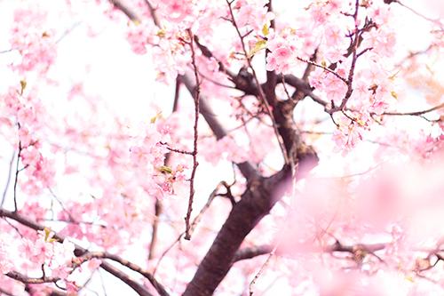 「公園」「春」「犬」などがテーマのフリー写真画像