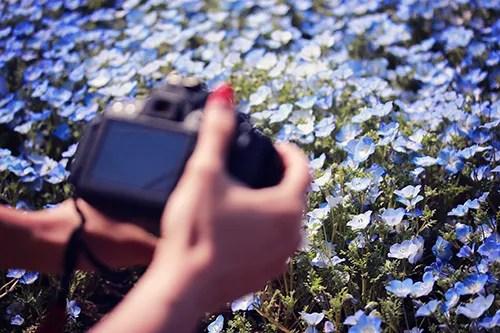 一眼レフでネモフィラの花畑を撮影する様子