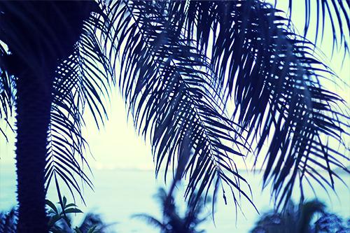 「シルエット」「ヤシの木」「リゾート」「夏」「植物」「海」などがテーマのフリー写真画像
