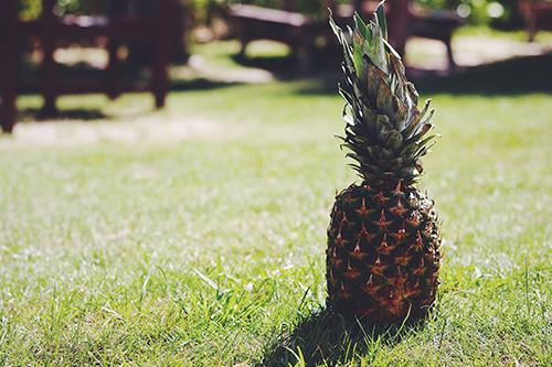 「パイナップル」「夏」などがテーマのフリー写真画像