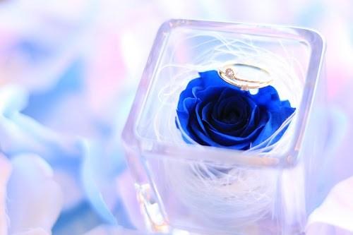 「アクセサリー」「プレゼント」「ホワイトデー」「指輪」「花」「薔薇」などがテーマのフリー写真画像