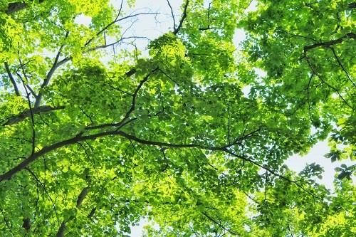 春の日差しを浴びてもりもり育った森の葉っぱたち