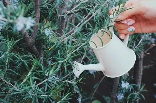 「カフェ」「コーヒー」「マグカップ」「女性・女の子」「飲み物」などがテーマのフリー写真画像
