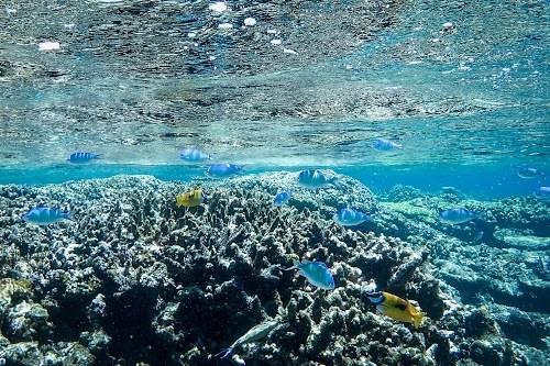 「キラキラ」「サンゴ礁」「リゾート」「八重干瀬(やびじ)」「南国」「夏」「宮古ブルー」「宮古島」「水中」「沖縄」「海」「離島」「魚」などがテーマのフリー写真画像