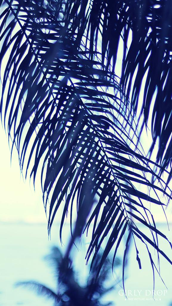 【オシャレなiPhone壁紙】ヤシの木ごしに眺める夏の海
