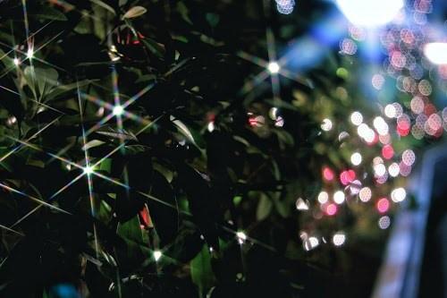 「イルミネーション」「オーナメント」「クリスマスツリー」「夜」「玉ボケ」「電飾」などがテーマのフリー写真画像