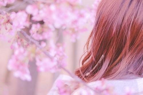 「ストール」「女性・女の子」「春」「桜」「花」などがテーマのフリー写真画像