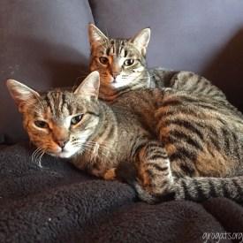 Lili i Sasha