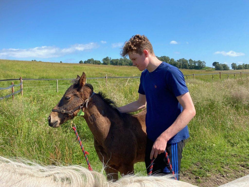 Will Bromley - Work Rider