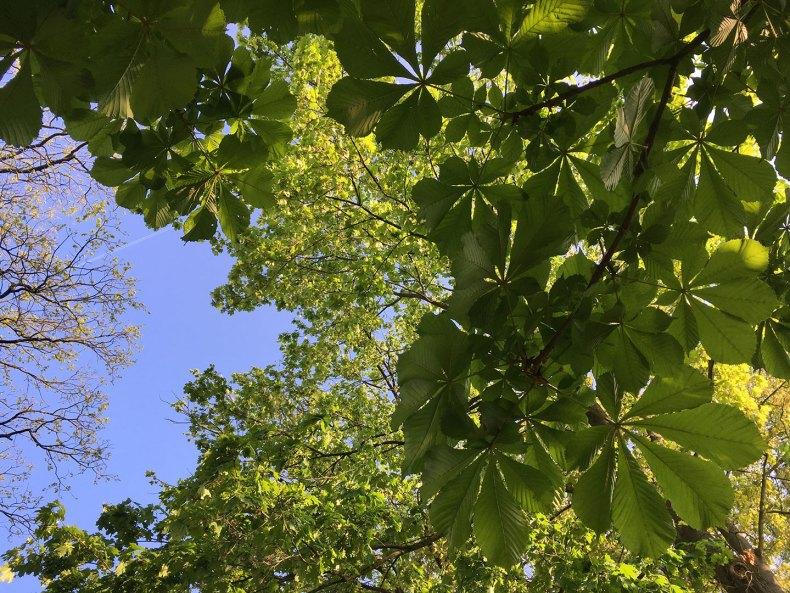 eigenwillige verschiedene Bäume mit frischem Grün