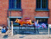 A Pig Roasting on the River Po, Soragna, Italy