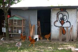 Chickens, Soragna, Italy