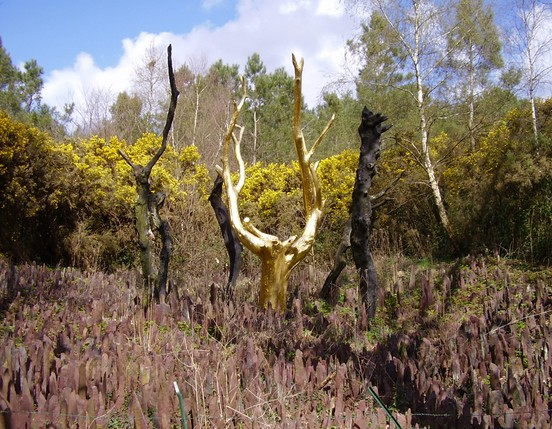 location-gite-morbihan-bretagne-visite-de-tréhorenteuc-l'arbre-en-or