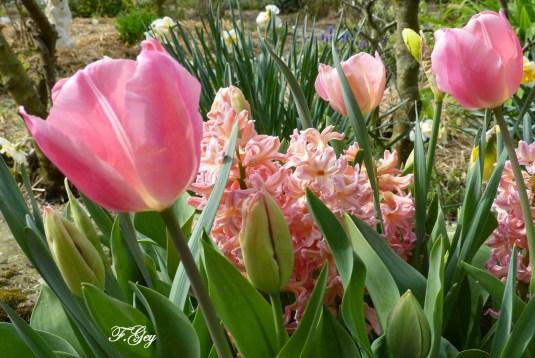 Fleurs du Pantgat-Hof