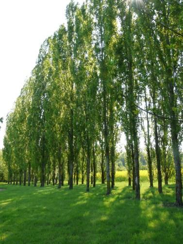 Un arboretum dans le jardin