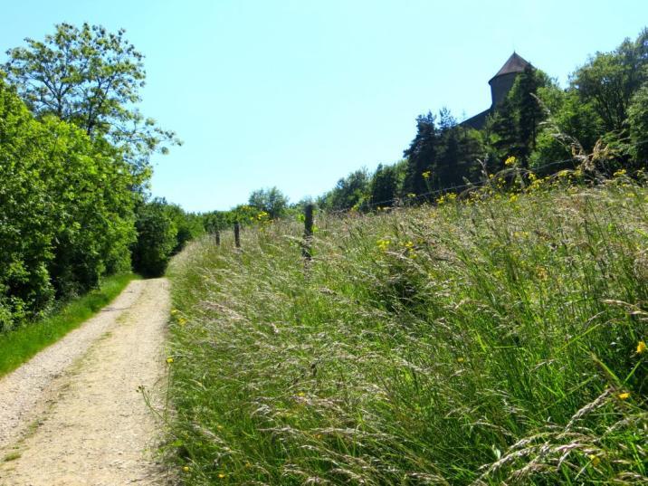 Le sentier menant au château des Allymes