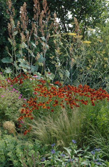 Voici quelques fleurs dans le jardin du gîte