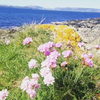 Isle of Cumbrae Flowers 2