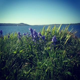 Isle of Cumbrae Flowers