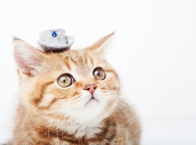 猫の便秘を解消するには 自宅で出来る方法をご紹介!
