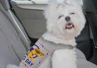 Autotrader National Dog Day Vests Sweepstakes