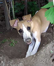 Even this dog wants to help plant a pollinator garden...