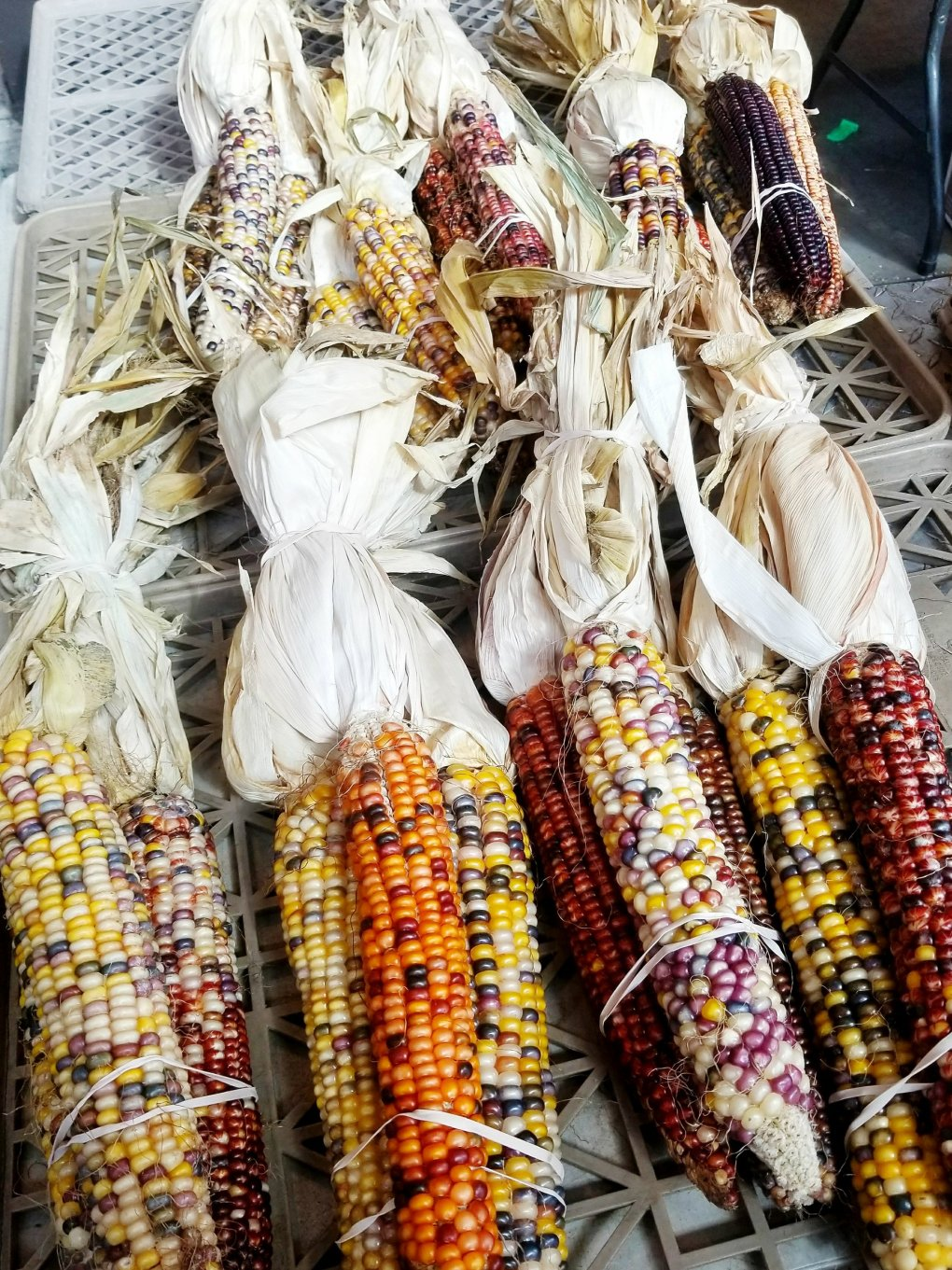 Ornamental Indian corn at Eastern Market