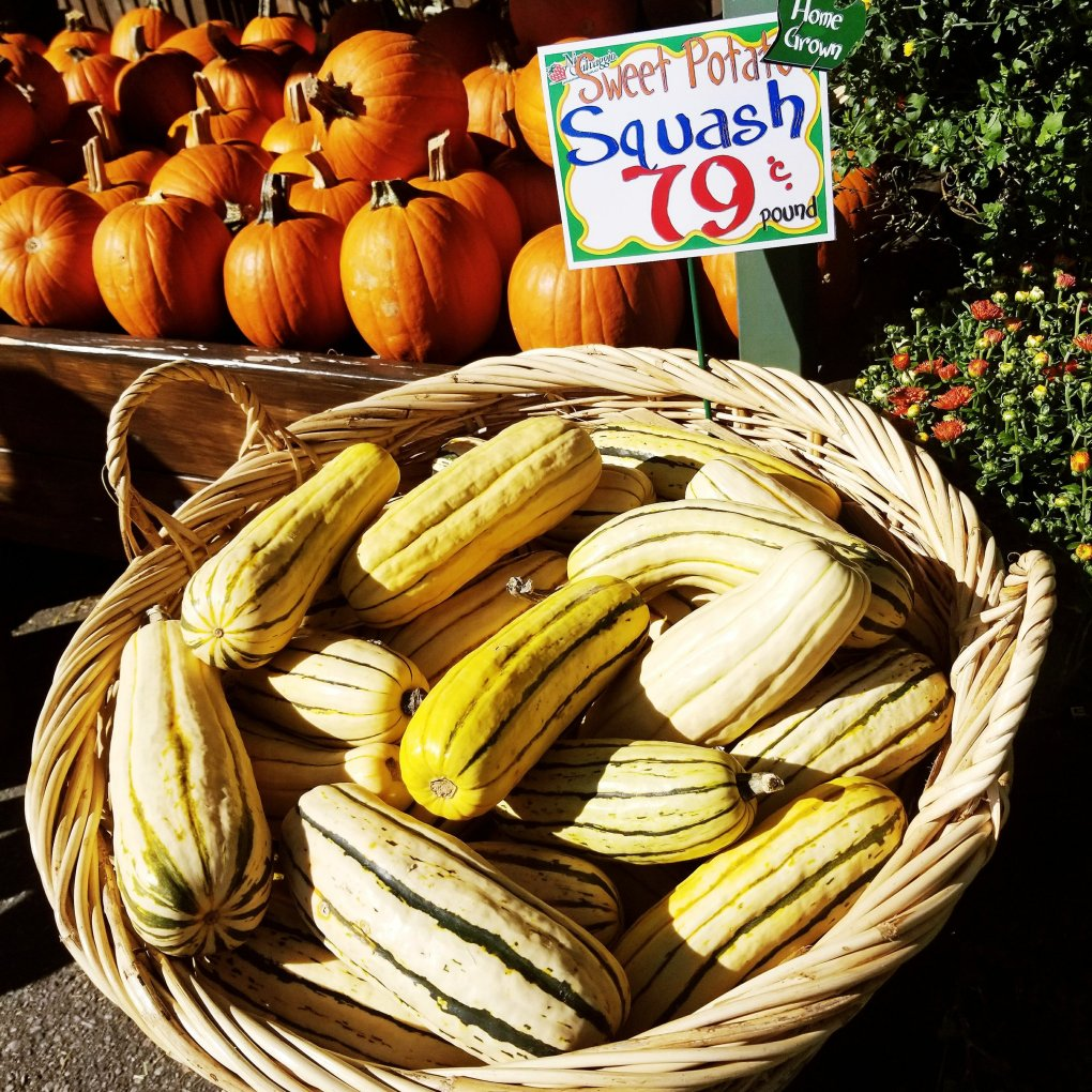 Sweet Potato Squash at Nino Salvaggio's International Marketplace