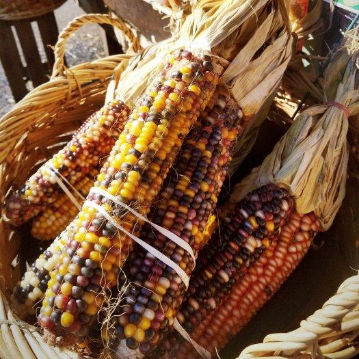 Indian corn at Nino Salvaggio International Marketplace