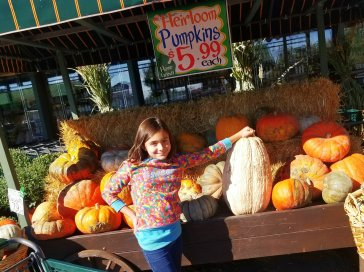 My daughter, Chloe, checking out the heirloom pumpkins at Nino Salvaggio's