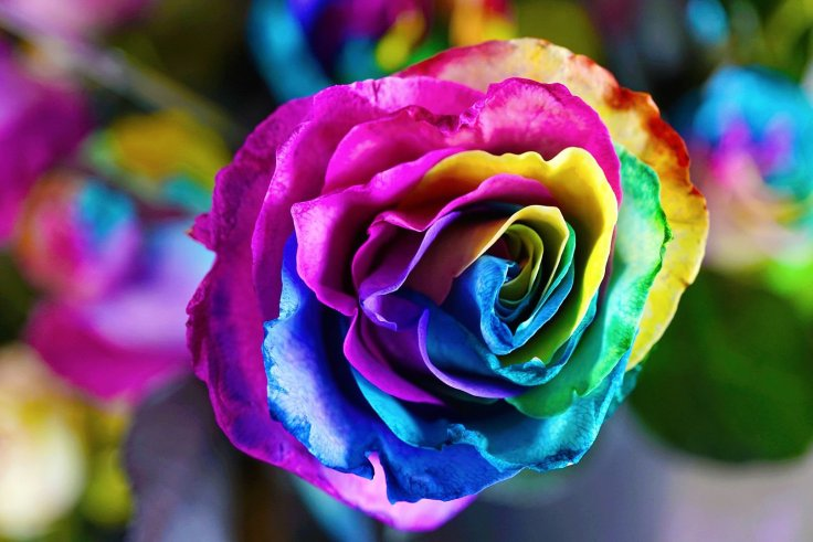 Eastern Market Flower Day 2019 (rainbow rose)