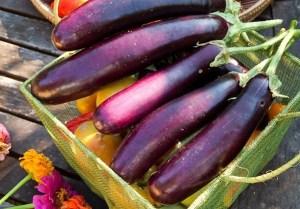 eggplant-tomato-harvest-lo-e1322608886579