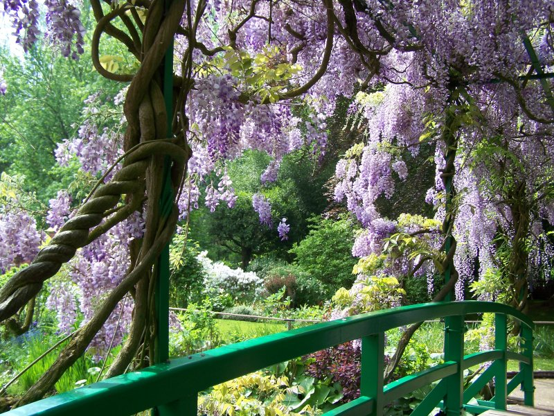 https://i2.wp.com/giverny-impression.com/gallery/water-garden/wisteria-bridge.jpg