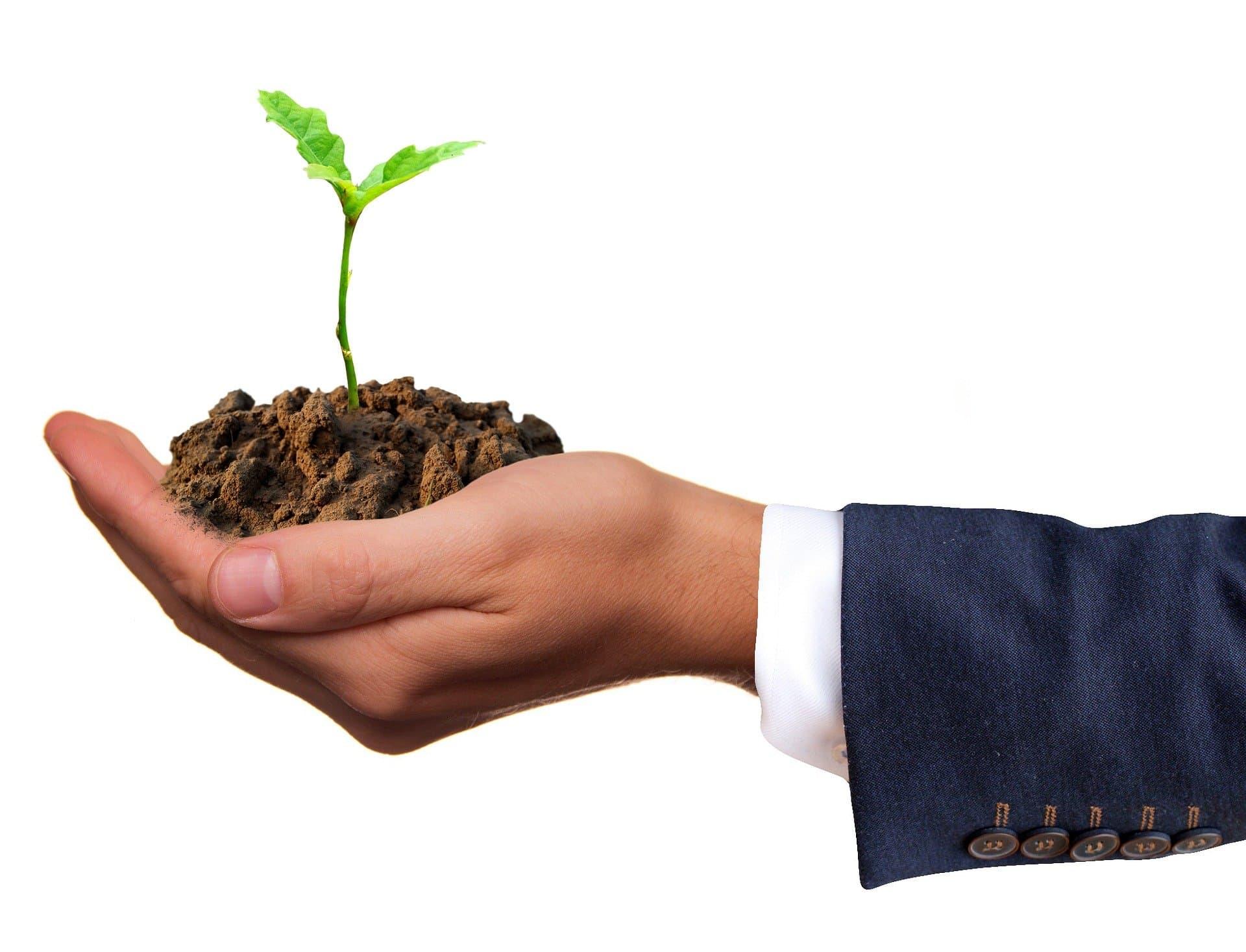 pousse d'une plante dans la main d'un homme