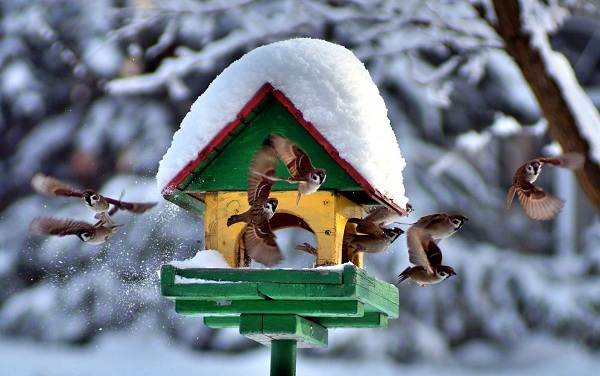 Зимующие-птицы-Названия-описания-и-особенности-зимующих-птиц-1