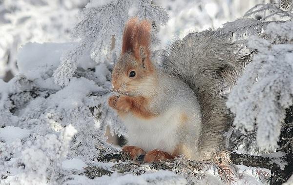 Equirrel-Djur Beskrivning - Egenskaper-View-Life-Life-and-onsdag-Breath-14