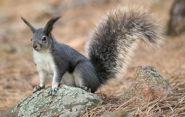 Equirrel-Djur-Beskrivning-Egenskaper-View-Life-Life-and-onsdag - Squirrel-7