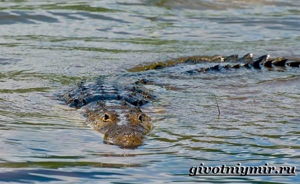 تمساح الحيوانات - نمط الحياة - والبيئة - الموئل التمساح -3