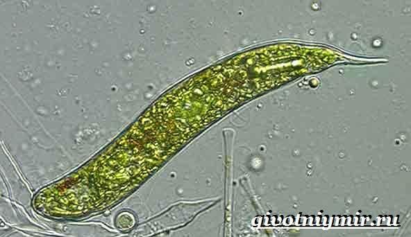 helminthiasis vélemény fórum paraziták a vaddisznókban