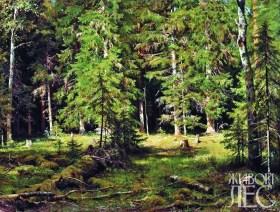 Лес. И.Шишкин