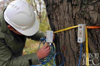 Диагностика состояния дерева при помощи арботома
