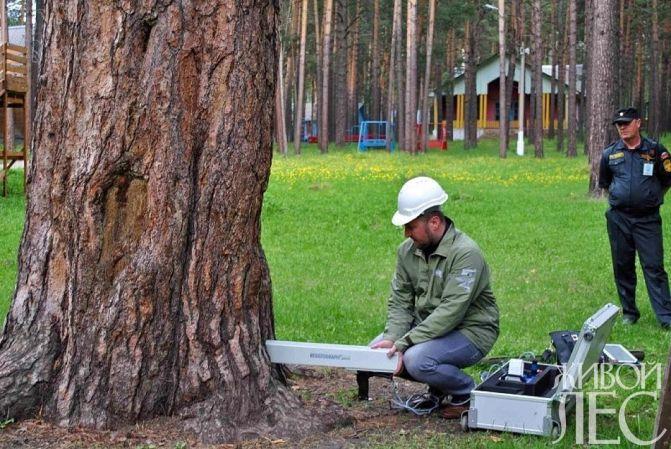 Диагностика состояния дерева при помощи резистографа