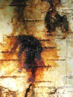 Эксудат на поверхность ствола, образующий яркие буро-коричневые потеки