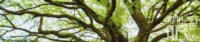 tree-1572188-640x480