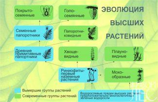 Эвалюция высших растений