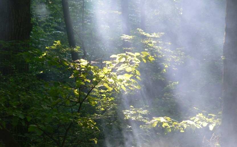 sun-into-smoked-forest-1393605-1280x960