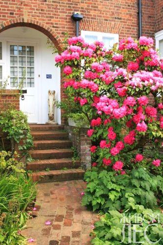 Крошечный палисадник декорирован цветущим рододендроном