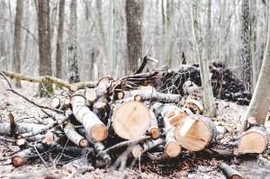 сажать деревья
