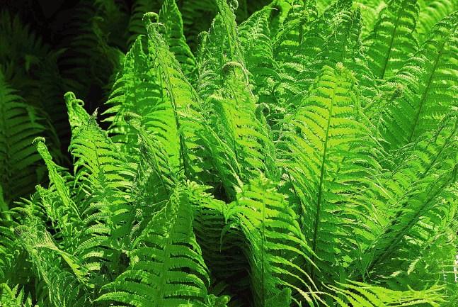 растения-фильтры